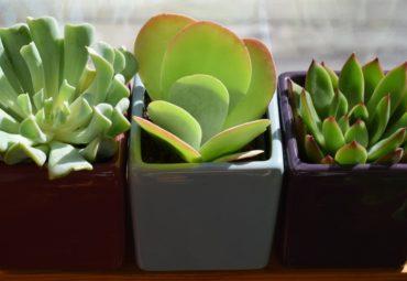 Ce au in comun articolele de mobila pentru birou si plantele?